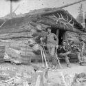 Cabin of S. J. Roberts, Cripple-Creek Colorado 1893