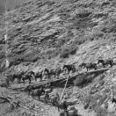 Pack Train on  Marshall Basin Trail - Telluride Colorado